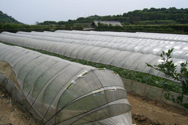 画像:萩相島スイカの栽培ハウス