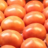 画像:山口あぶトマトのイメージ
